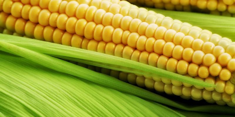 bigstock_Corn_on_the_cob_between_green__13138106