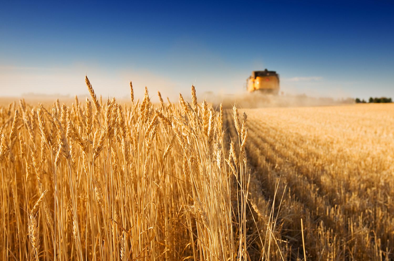 bigstock-Harvest-Time-1946380